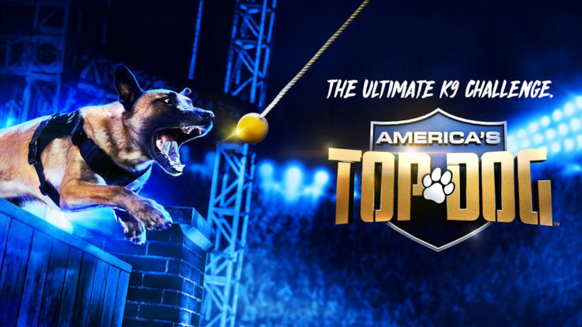 Photo for America's Top Dog