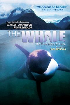 The Whale movie poster.