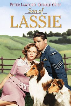 Son of Lassie movie poster.