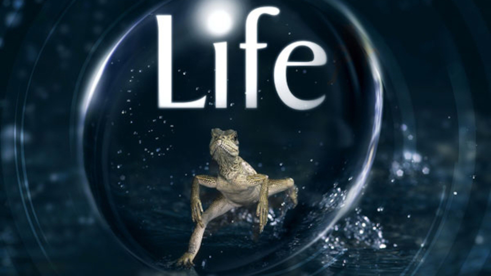Image for the TV series Life
