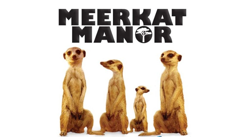 Image for the TV series Meerkat Manor