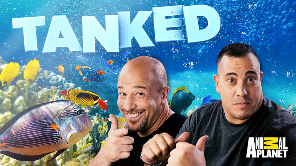 Image for the TV series Tanked!