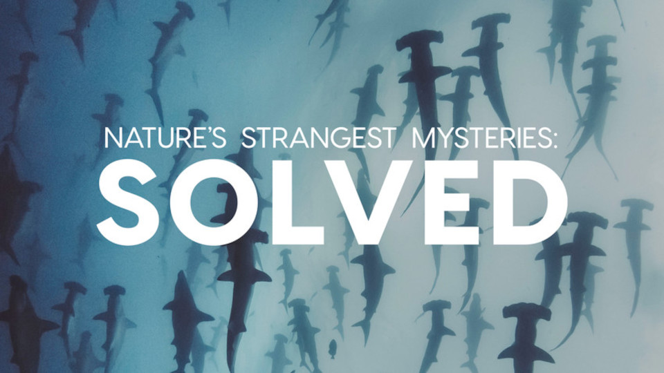 Image for the TV series Nature's Strangest Mysteries: Solved