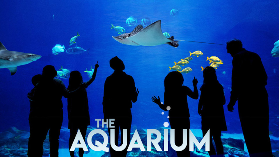 Image for the TV series The Aquarium